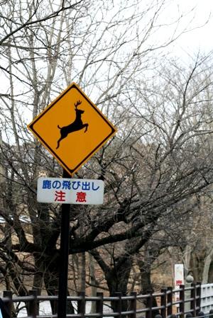 高円の秋野のうへの朝霧に妻呼ぶ牡鹿出で立つらむか_b0048834_684267.jpg