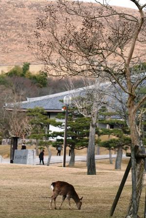 高円の秋野のうへの朝霧に妻呼ぶ牡鹿出で立つらむか_b0048834_695373.jpg