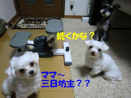 b0206444_22461341.jpg