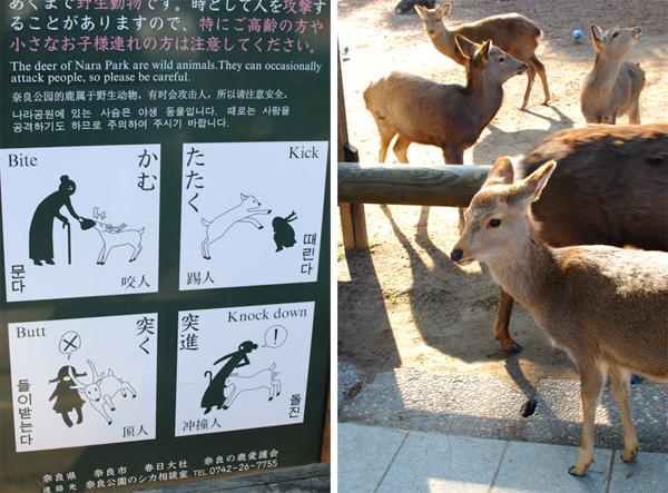 そうだ京都と奈良、行こう。 三日目_a0003650_23181273.jpg