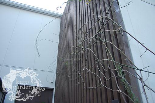 バラの誘引【アプローチ・ベランダ】_e0119151_11242689.jpg