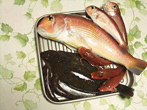 高級魚でも・・・。_d0034352_21455750.jpg