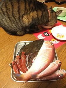 高級魚でも・・・。_d0034352_21543191.jpg