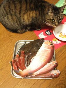 高級魚でも・・・。_d0034352_21544464.jpg