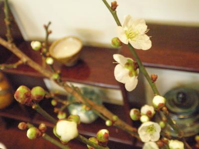 梅の花in東花風_f0233163_1463030.jpg