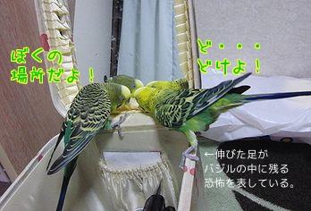 f0196665_232159.jpg