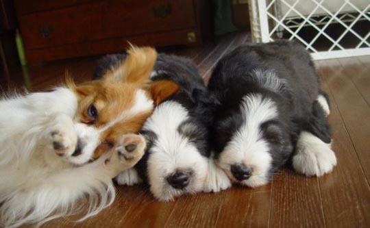 犬に好かれるには_f0211789_2181190.jpg