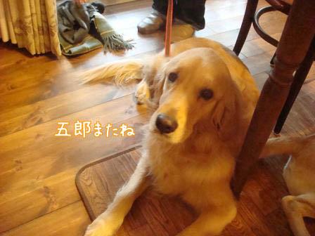 久しぶりのメイちゃん_f0064906_17582297.jpg