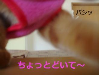 b0200310_17223260.jpg