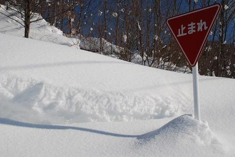 26日  水曜       夜は 雪に_f0210811_2182551.jpg