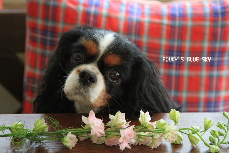 お気に入りのお花屋さんに行き~♪ ^^_c0145250_19584514.jpg