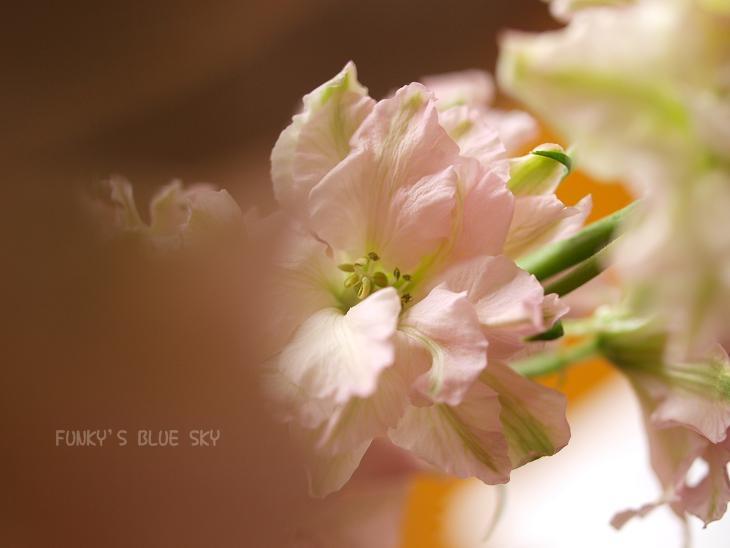 お気に入りのお花屋さんに行き~♪ ^^_c0145250_19592528.jpg