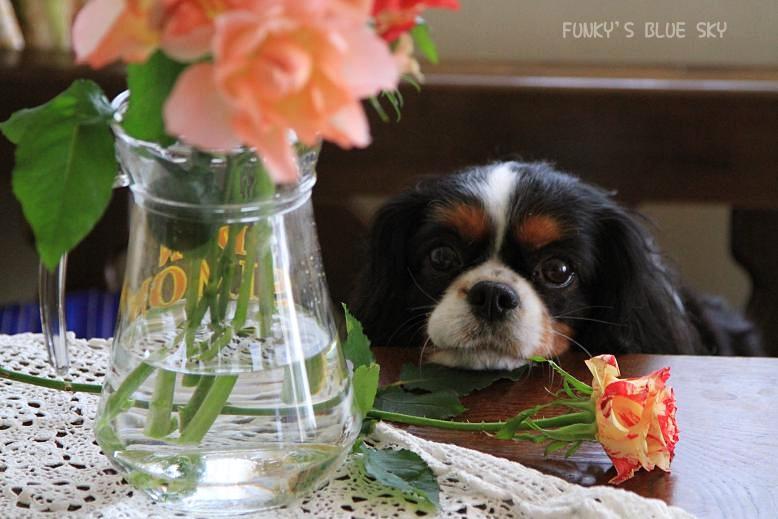 お気に入りのお花屋さんに行き~♪ ^^_c0145250_2024189.jpg
