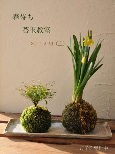 【WORKSHOP】春待ち苔玉教室<参加者募集中>_e0130953_1016261.jpg
