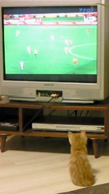 サッカーといえば。。。_f0221271_1491285.jpg