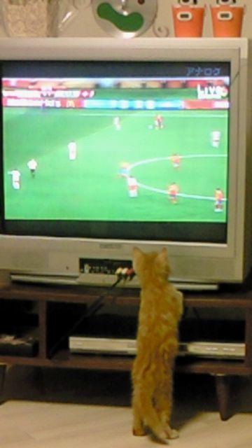 サッカーといえば。。。_f0221271_1493847.jpg