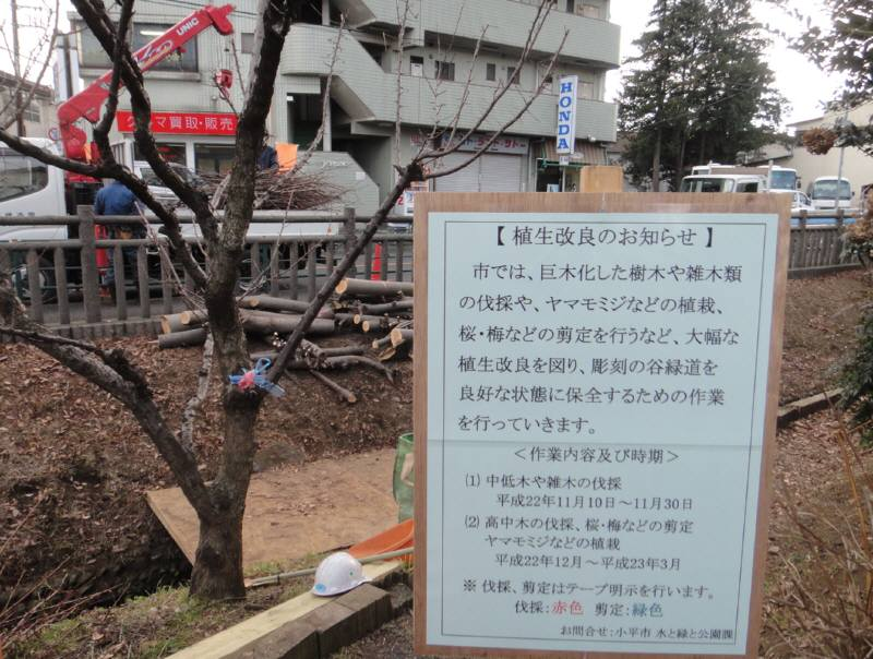 彫刻の谷緑道の植生改良_f0059673_22541177.jpg
