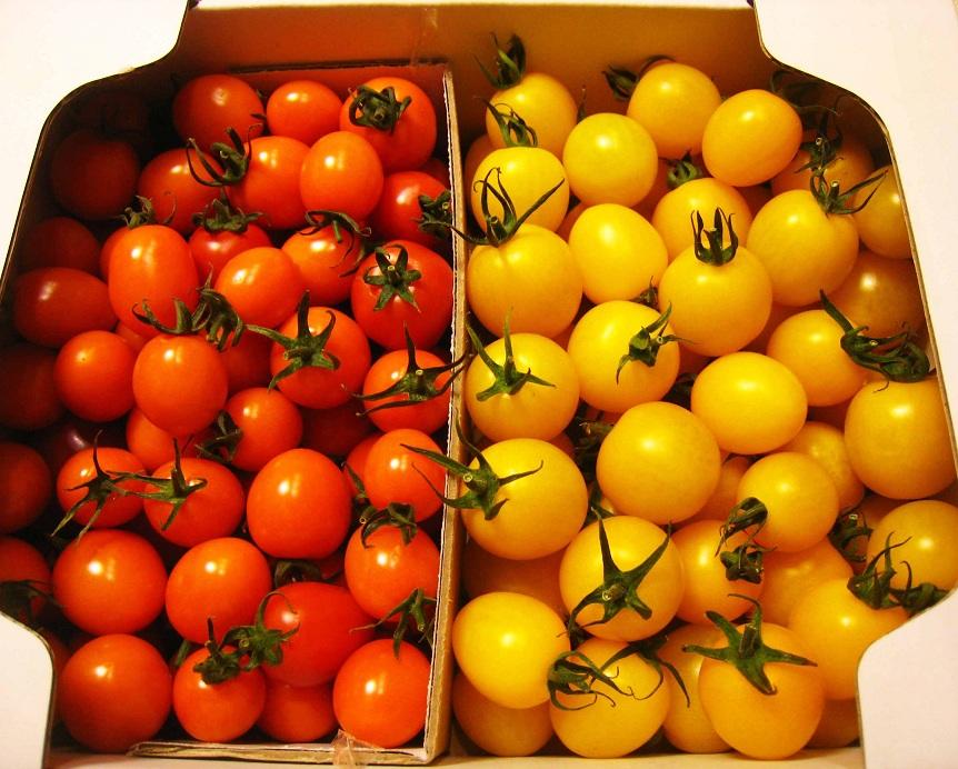 新鮮で美味しいミニトマト_a0107574_2144917.jpg