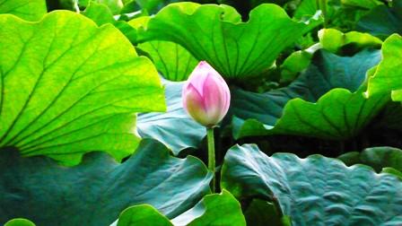 植物の部位によって使う道が違う―その⑤_f0138875_1435143.jpg