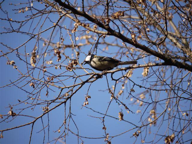 ウォーキングで出会う野鳥たち(*^-^)ニコ_b0175688_13115923.jpg