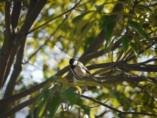 ウォーキングで出会う野鳥たち(*^-^)ニコ_b0175688_13121348.jpg