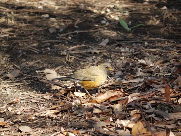 ウォーキングで出会う野鳥たち(*^-^)ニコ_b0175688_13132517.jpg