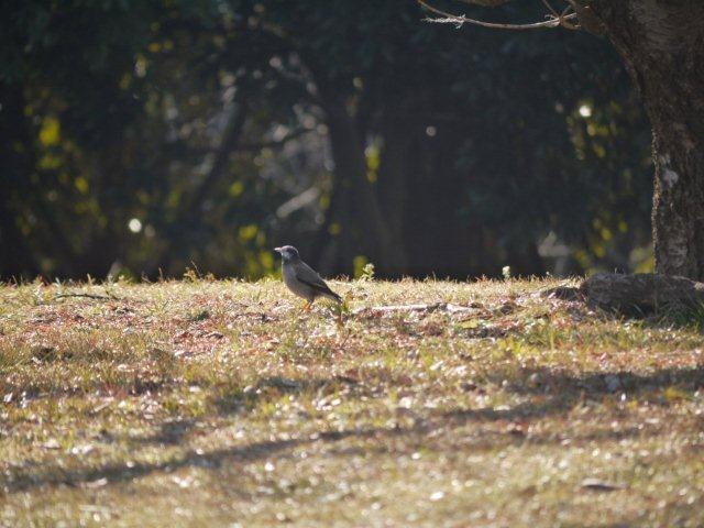 ウォーキングで出会う野鳥たち(*^-^)ニコ_b0175688_1315122.jpg
