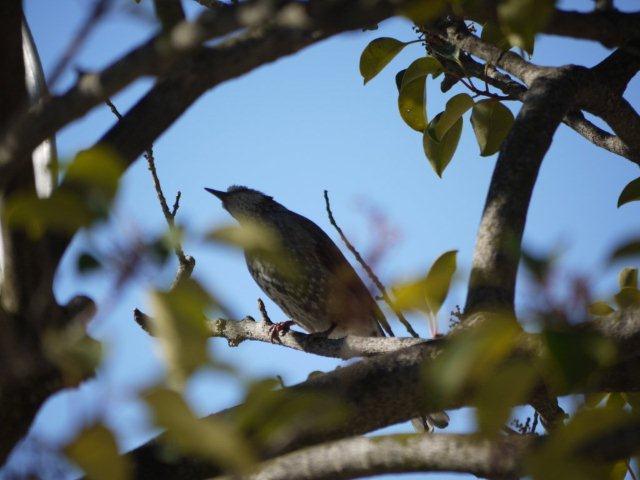 ウォーキングで出会う野鳥たち(*^-^)ニコ_b0175688_13151494.jpg