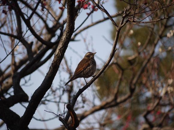 ウォーキングで出会う野鳥たち(*^-^)ニコ_b0175688_1317936.jpg