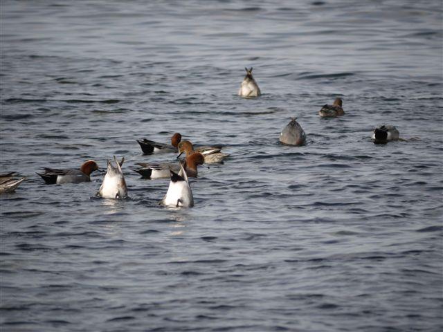 ウォーキングで出会う野鳥たち(*^-^)ニコ_b0175688_1322079.jpg