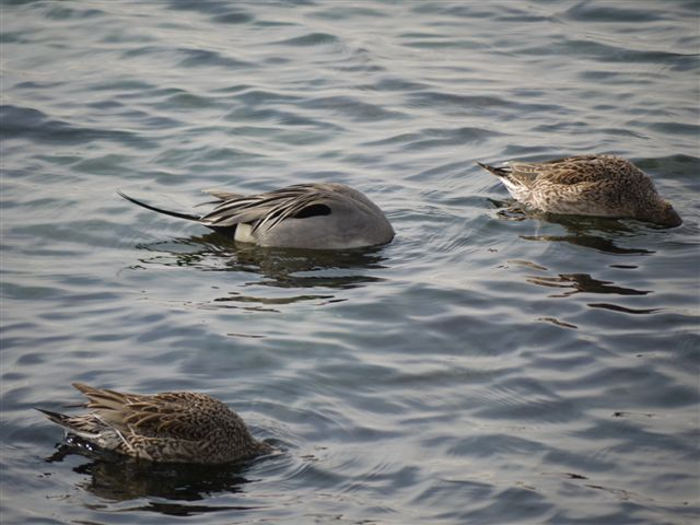 ウォーキングで出会う野鳥たち(*^-^)ニコ_b0175688_13221490.jpg