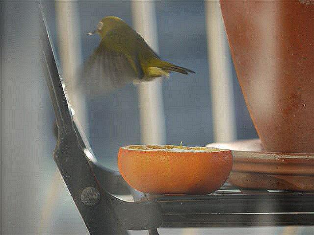 ウォーキングで出会う野鳥たち(*^-^)ニコ_b0175688_1395147.jpg