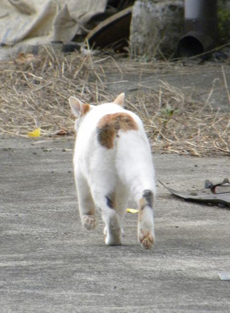 冬の猫_f0144003_2059163.jpg