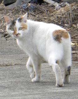 冬の猫_f0144003_2113883.jpg