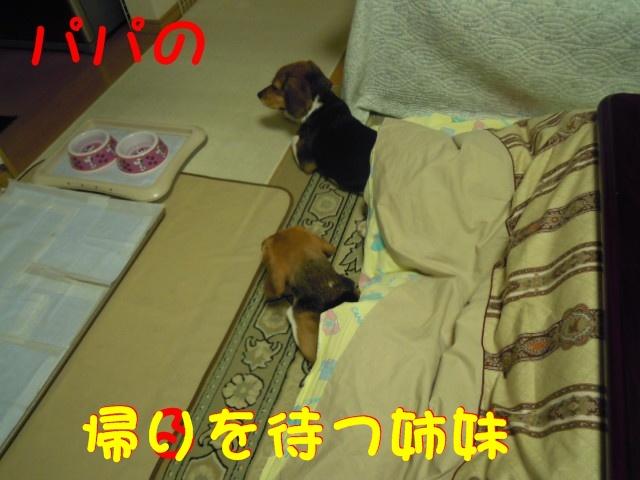 c0166622_1424467.jpg