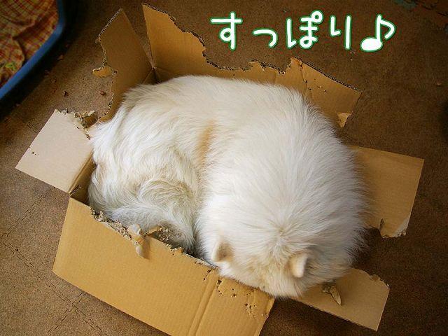 誕生日ごはん(完結編)_c0062832_17144592.jpg