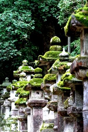 藤波の花は盛りになりにけり平城の都を思ほすや君 _b0048834_7232884.jpg