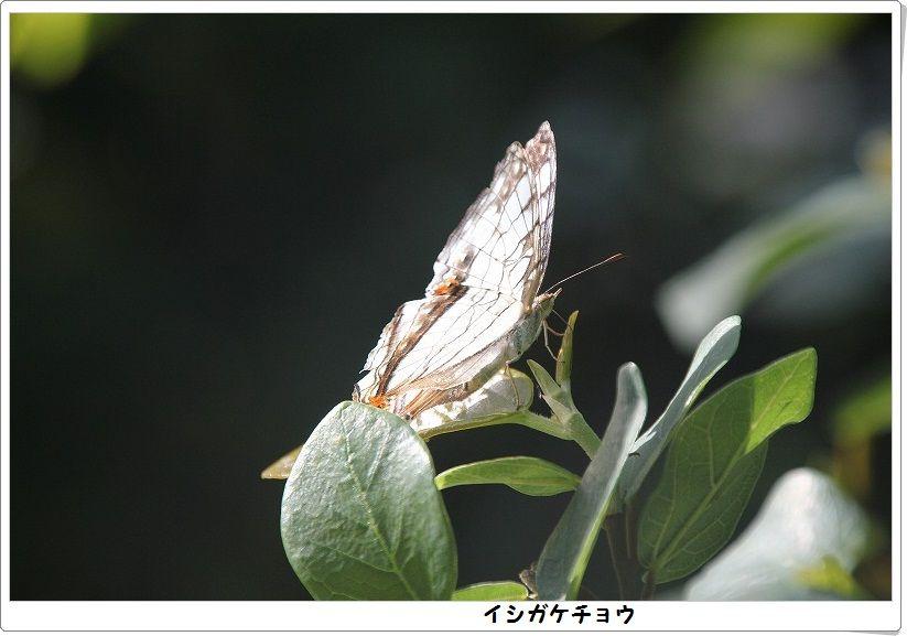 e0052135_18141214.jpg