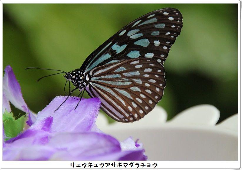 e0052135_18153091.jpg