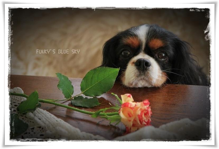 お気に入りのお花屋さんに行き~♪ ^^_c0145250_11453056.jpg