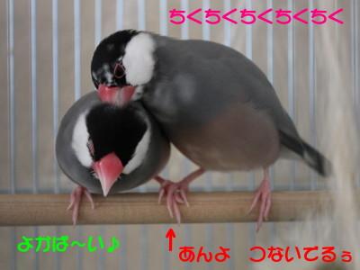 b0158061_1931231.jpg
