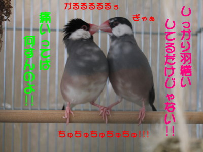 b0158061_1933897.jpg