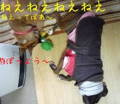 f0177261_2002362.jpg