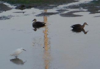 河原も凍る今年の冬_e0175370_8443733.jpg