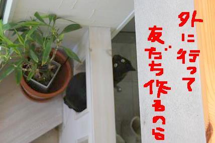d0009175_19405929.jpg
