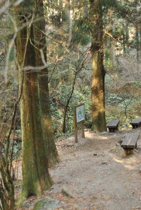 森の物語_b0194880_1446349.jpg
