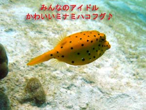 f0144385_0154274.jpg