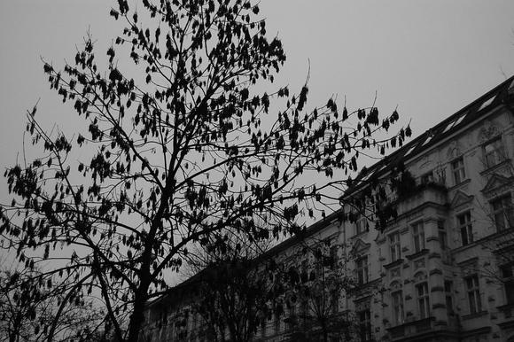 今朝も暗い!_c0180686_1728226.jpg