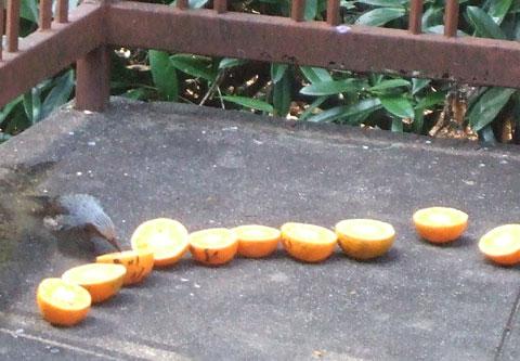 鳥たちの味覚?         ._d0141987_1885132.jpg