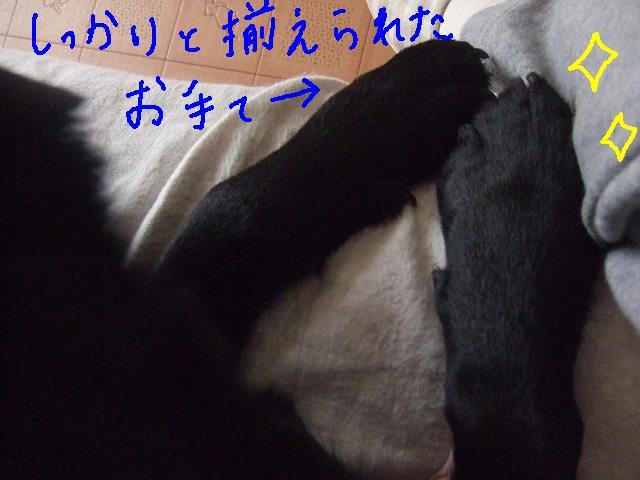 e0160787_18424912.jpg